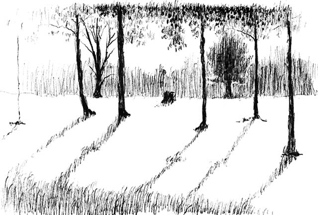 Pen and ink drawing of early evening in Governors Park.